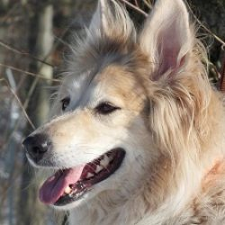 hund-2016-daisy3