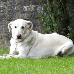 hund-2016-gabo