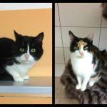Katze-2018-Chiara und Kovu