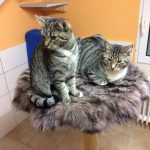 Katze-2018-Melody und Maddox 3