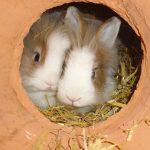 Kleintiere-2018-Puh und Bunny 2
