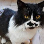 Katze-2018-Charlie 2