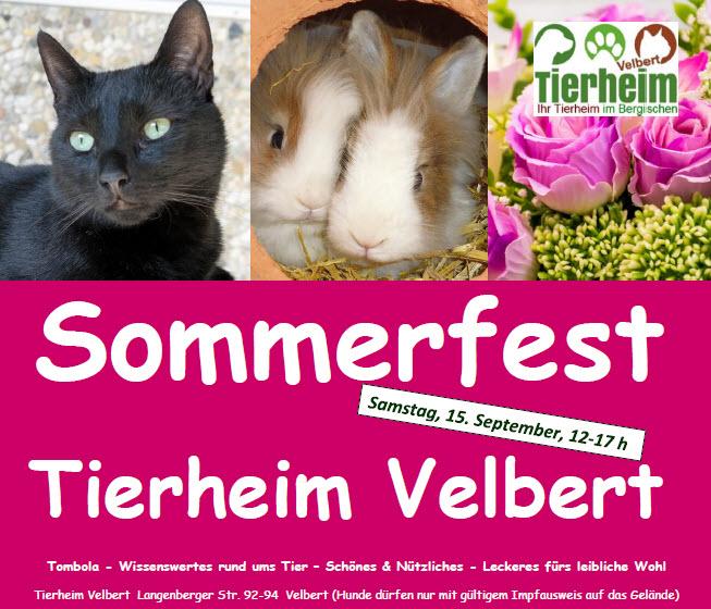 News-2018-Ankündigung Sommerfest
