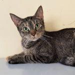 Katze-2018-Mirena 1