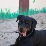 Hund-2018-Jordan 3