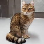 Katze-2018-Moni 3