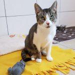 Katze-2018-Amalia3