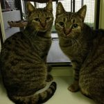 Katze-2018-Barry und Iggy-Foto1