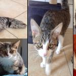 Kitten-Rasselbande_1