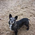 Glück gehabt 2019-Hund-Motte 4
