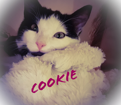 Cookie – hat Interessenten