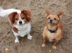 Sammy und Lucky