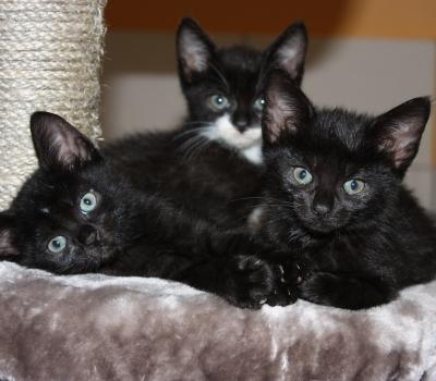 Smillas Babys: 9 Kitten und Pebbles