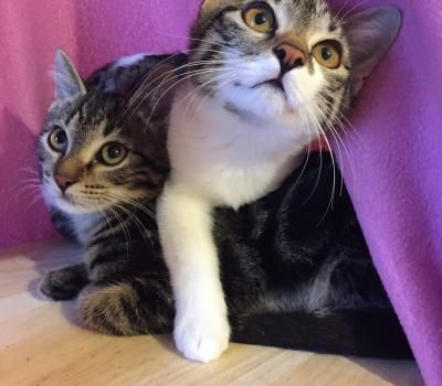 Miffy und Magnus