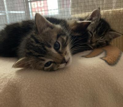 6 Kitten
