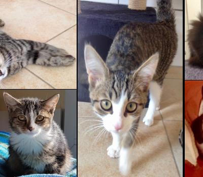 Kitten-Rasselbande
