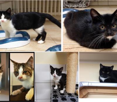 Katzenkinder-Rasselbande
