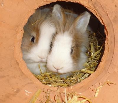Puhi und Bunny