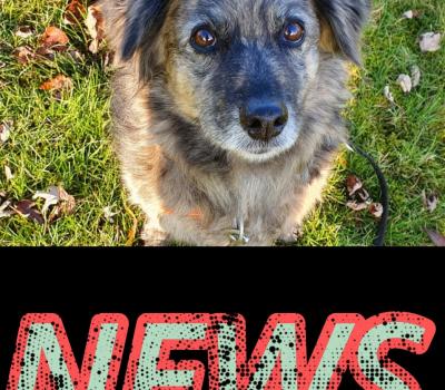 Tierschutzverein Velbert-Heiligenhaus e.V. Absage / Verschiebung der Mitgliederversammlung 2020