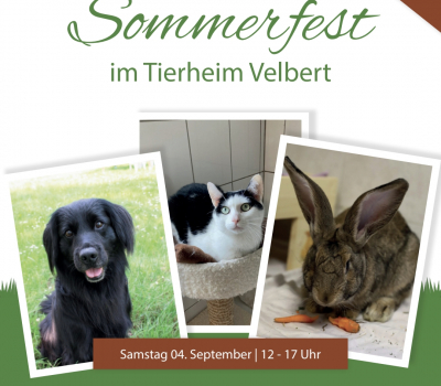 Save the Date : Sommerfest