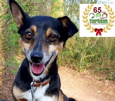 65 Jahre Tierheim Velbert / 65 neue Mitglieder