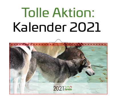 "Kalender 2021 ""Lucky Cats & Dogs"""